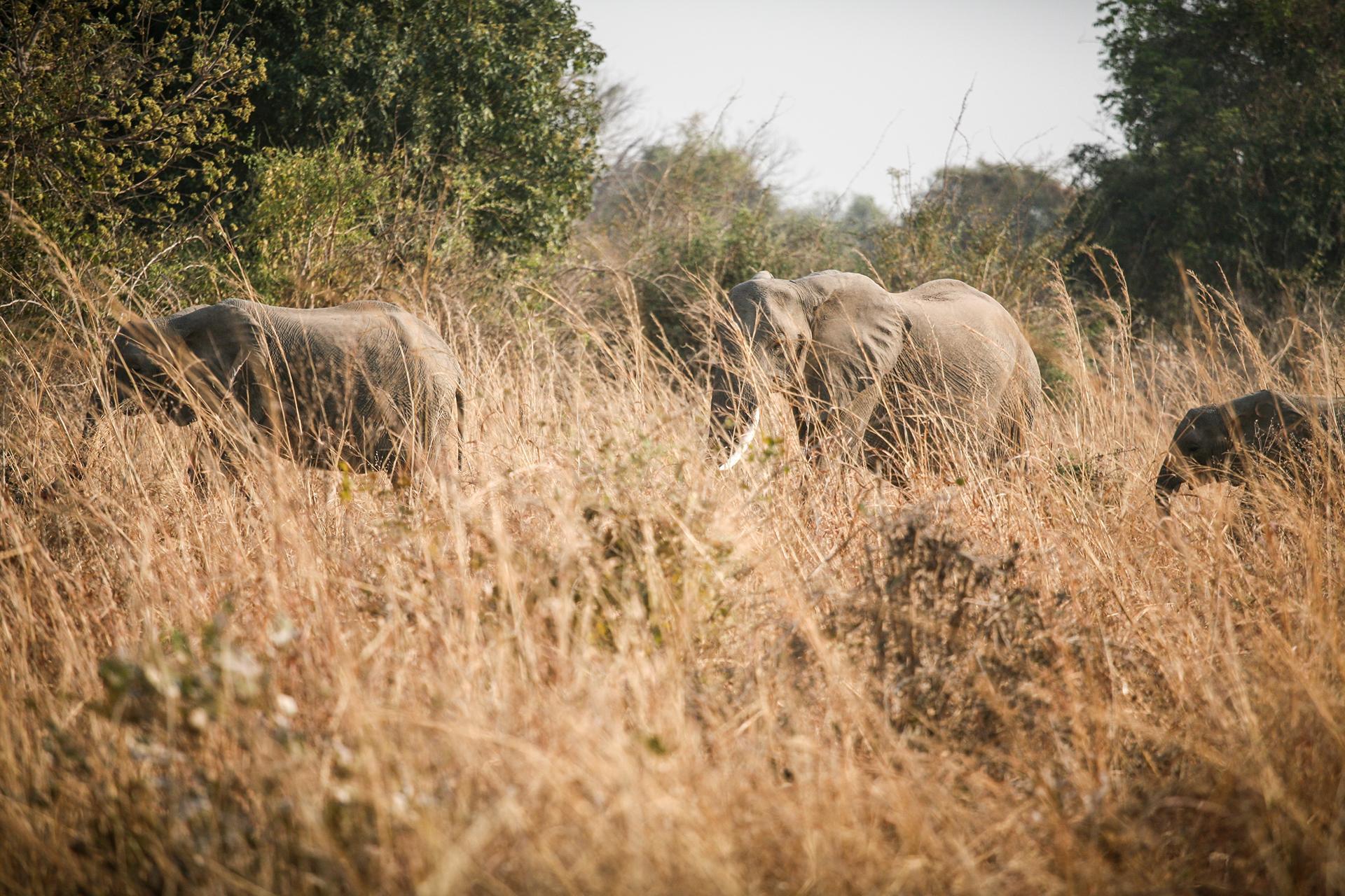 Национальный парк Замбии / Wilderness of Zambia