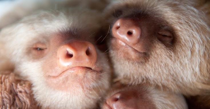 sloth-04.jpg