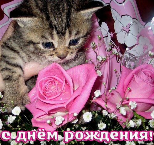 Открытка с днем рождения женщине с кошками 70