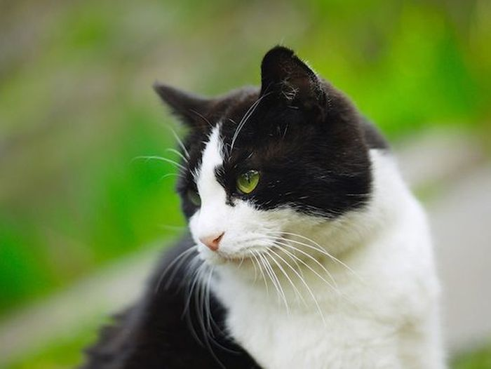 2. Почему кот, лёжа у вас на руках, перебирает лапами, «взбивая» что-то? Причина опять же в детстве.