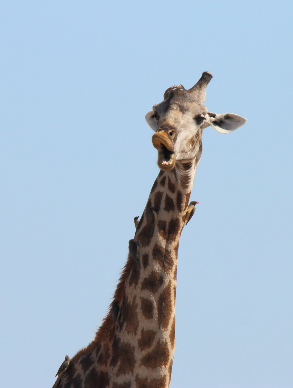 11. Молящаяся белка. (Фото Isabelle Marozzo   Barcroft Images   Comedy Wildlife Photo Awards):