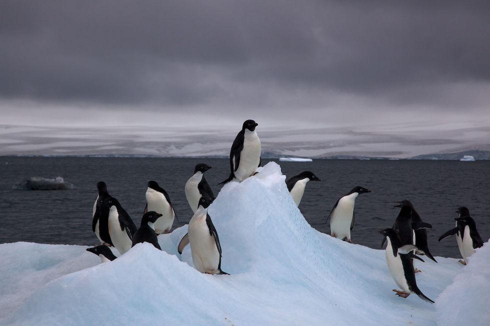 Антарктида Любой список самых пустынных мест планеты должен включать Антарктиду. Огромный континент,