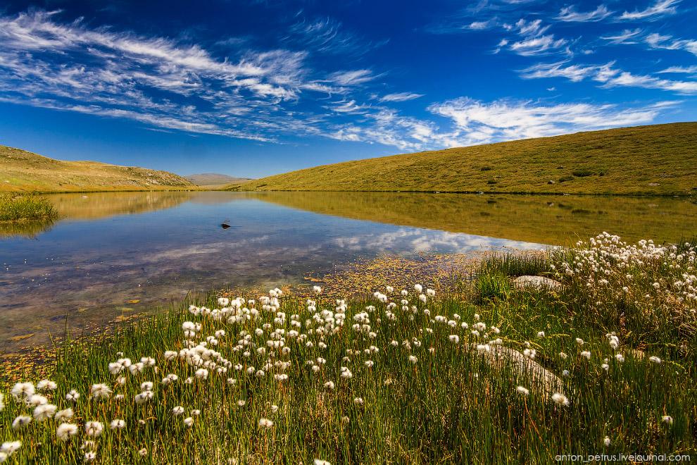 16. В воде ручейка, впадающего в озеро, цвел роголистник — такое известное водное растение. Цве