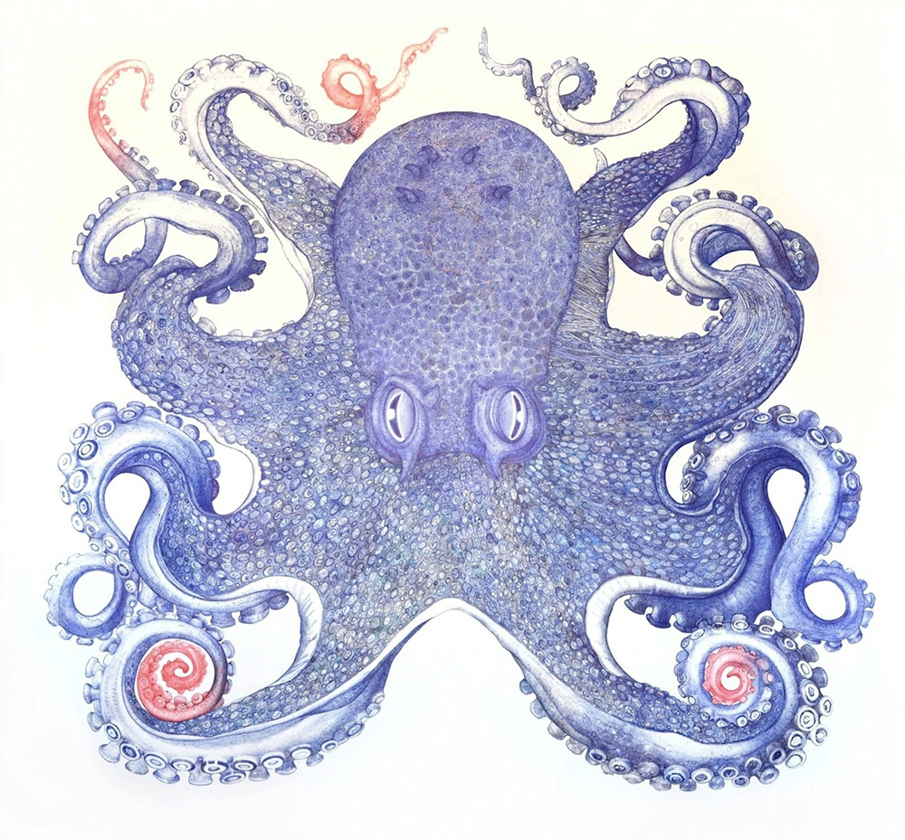 Deep Blue, Octopus . Ballpoint pen on archival Bee Rag paper, 62 x 64 inches