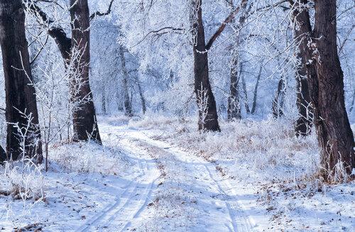 Молдову ждет аномально холодная зима