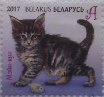 2017 котенок мей-кун А