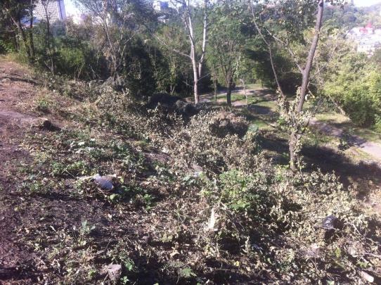 ВКиеве около Пейзажки без разрешения вырубили 164 дерева