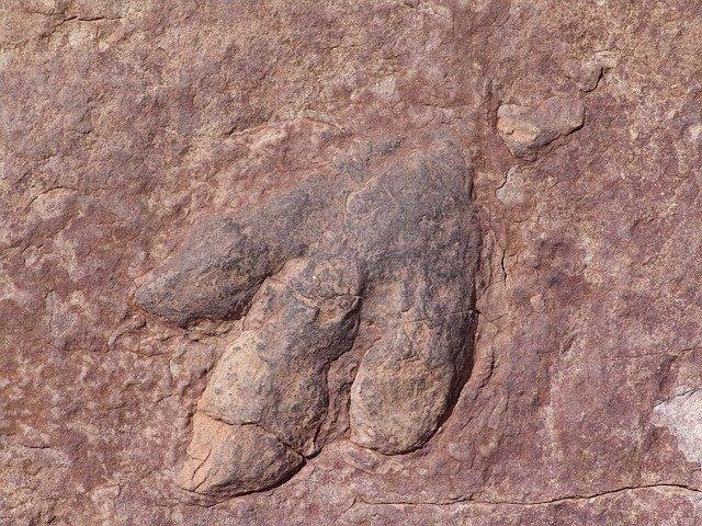 ВКаталонии найдены следы древней рептилии