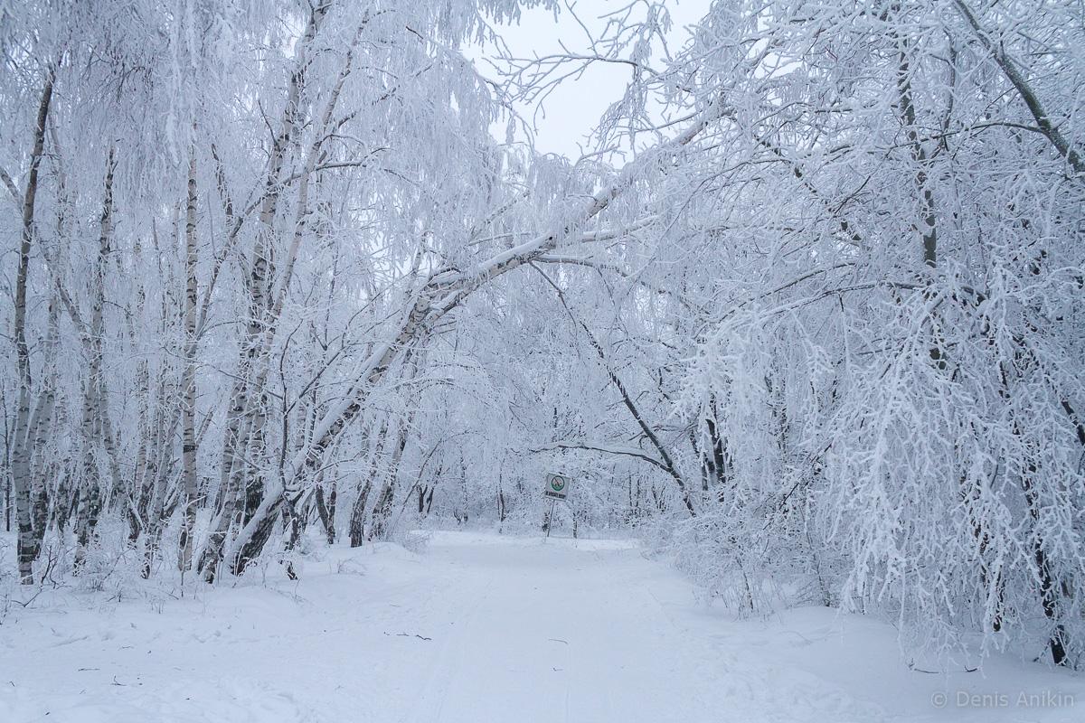 Кумысная поляна зима фото 11