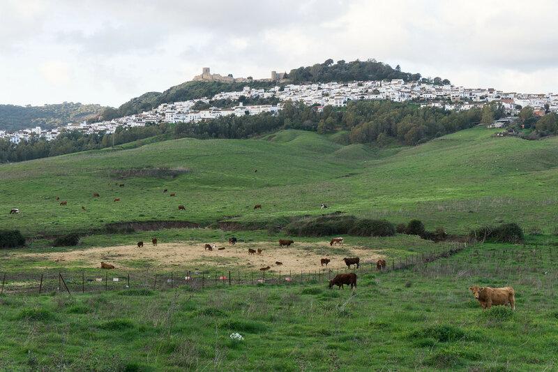Химена-де-ла-Фронтера (Jimena de la Frontera)