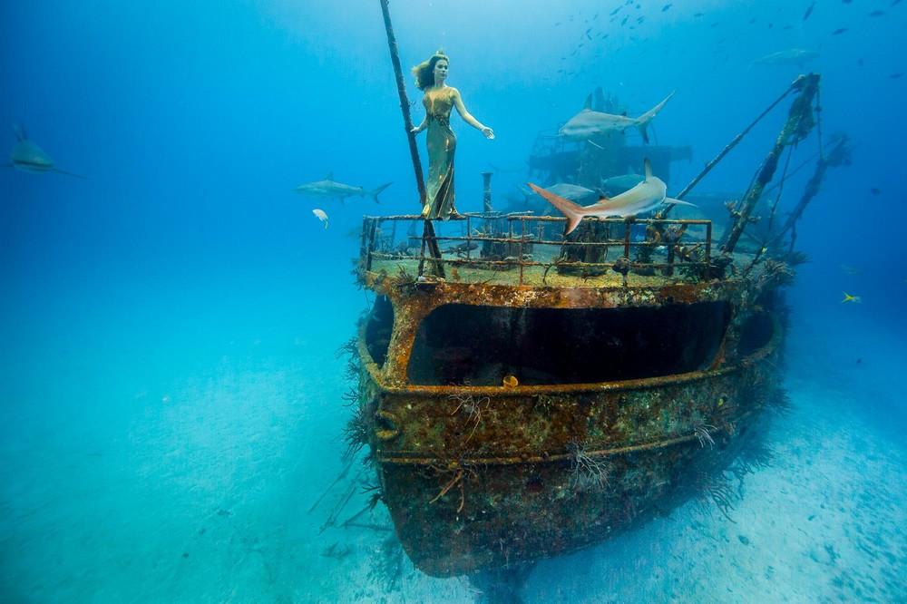 Впечатляющая фотосессия с акулами