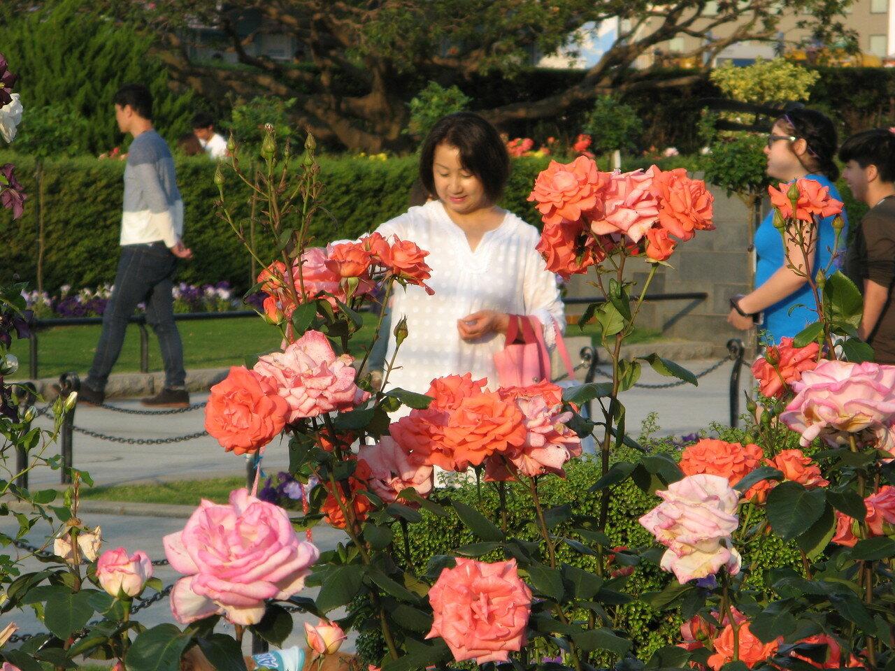 Япония. Сады морского парка Ямасита коэн в городе Йокогама
