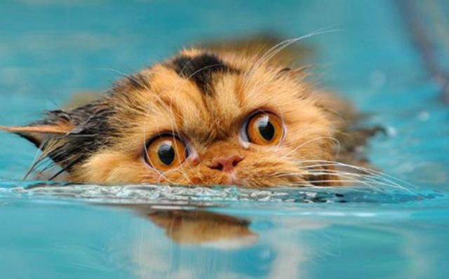 Нужно купать кошек