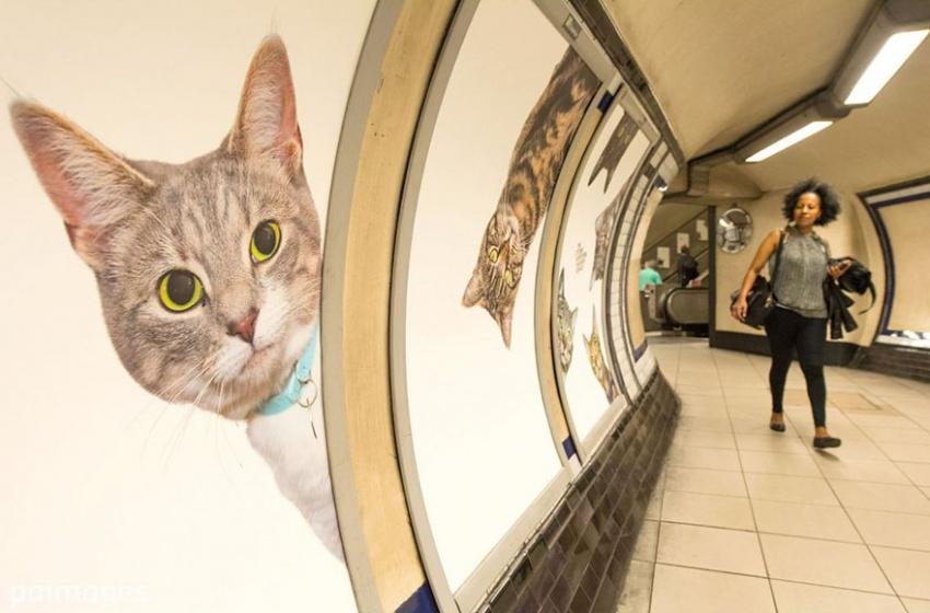 Активисты из Лондона придумали, как избавиться от рекламы в метро и помочь животным (7 фото)