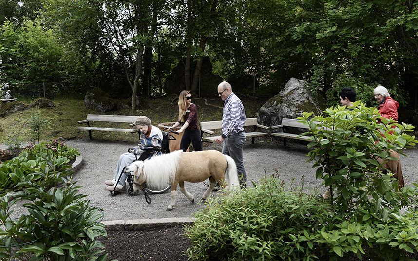 8. Сидя в инвалидном кресле, Хельга выгуливает Аско вокруг клумб, держа ее за уздечку.