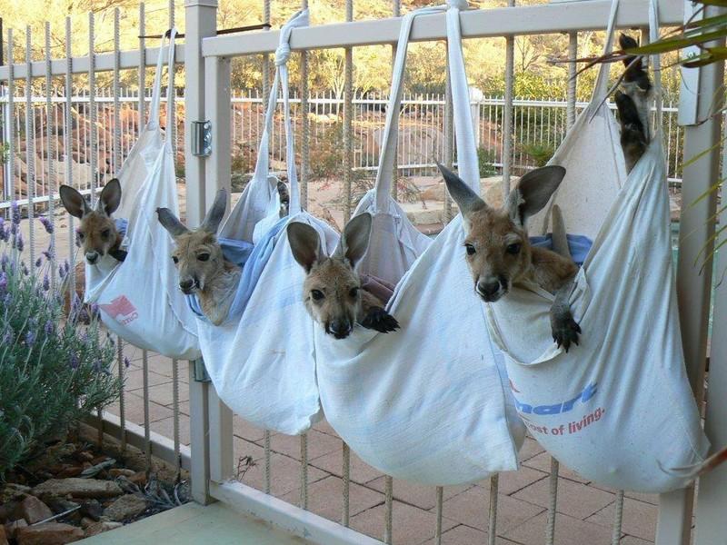 5. «Это была раздутая и гниющая самка кенгуру. Она была мертва уже несколько дней, но в ее сумке был