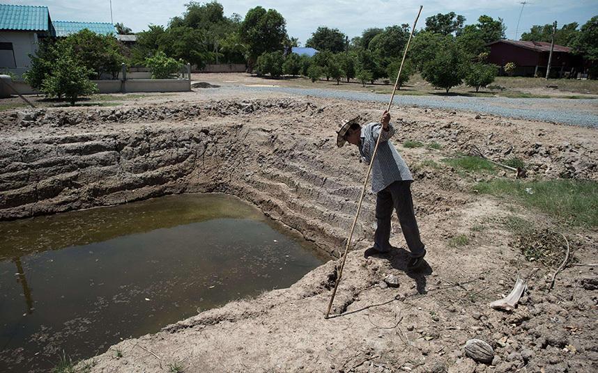 3. Тайский фермер рассматривает измельчавший искусственный пруд в провинции Супханбури.