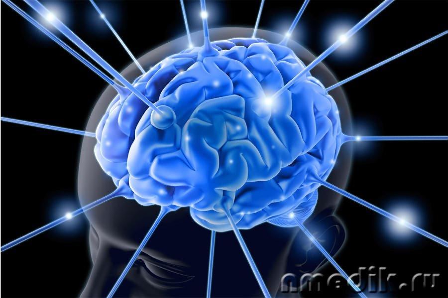 Ученые отыскали участок мозга, помогающий перенимать опыт