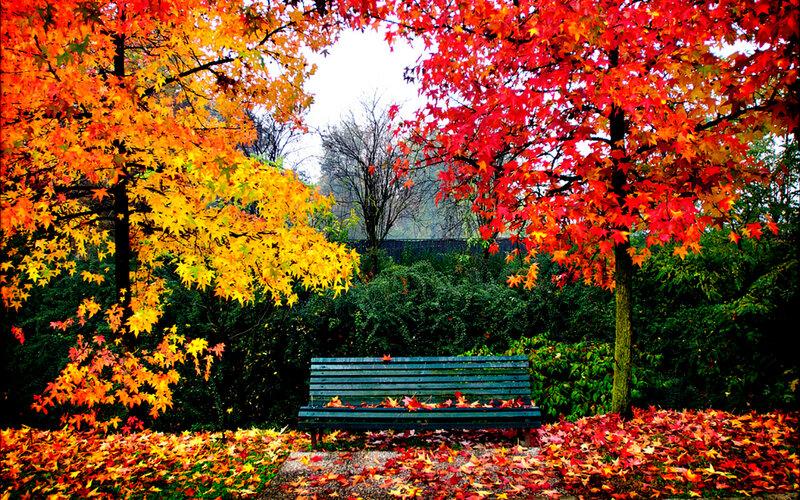 Красивые и немного печальные обои Осень 2016