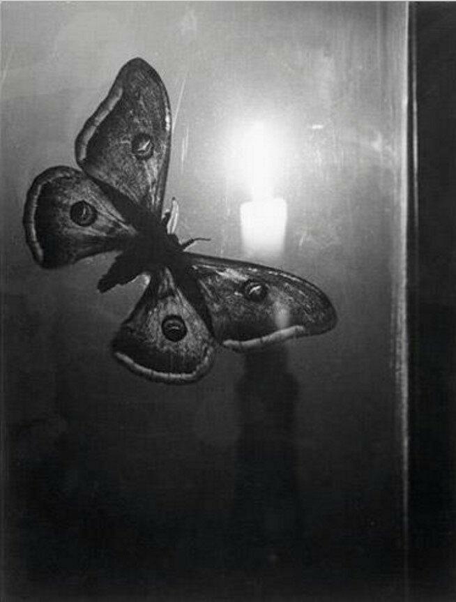 1933. Бабочка и свеча