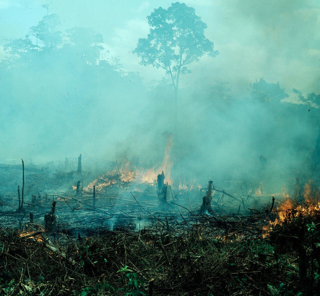 Престея. Выжигание леса