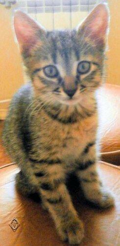 Умный взгляд котёнка