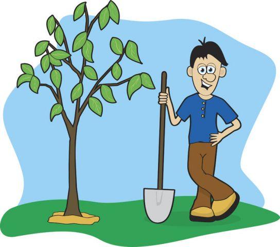 14 мая День посадки леса. Дерево посажено