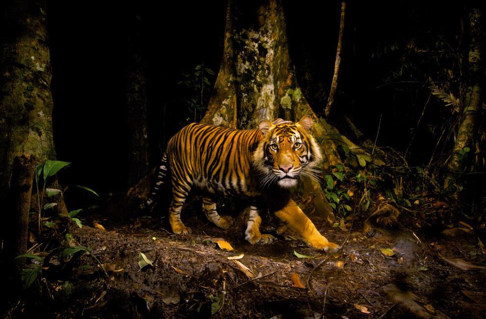 Потрясающие кадры дикой природы (10 фото)