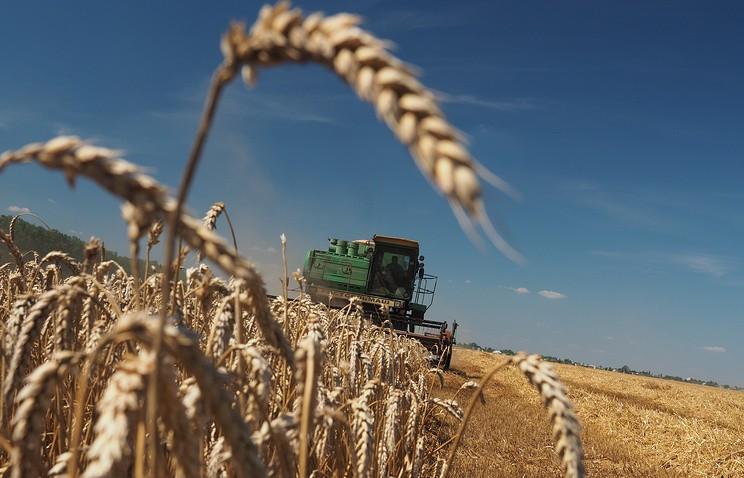 МСХ США: Мировое производство пшеницы вырастет дорекордных 743,4 млн. т