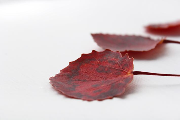 Осеннее равноденствие  Slow Life Blog