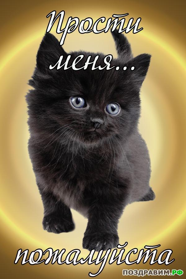 Телефон девушки, открытки прости меня котенок