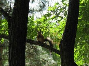 Путешествие и отдых в Одессе - белочка на дереве
