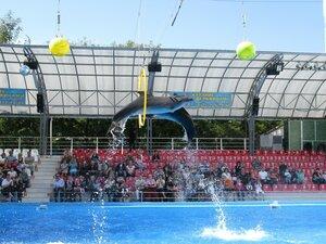 Достопримечательности Одессы - дельфинарий Немо