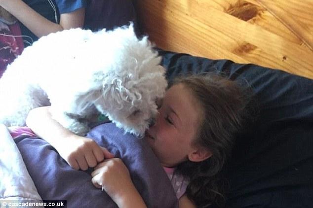 В июне, когда Милли уснула на диване, Элмо вдруг вскочила и начала лизать ей лицо. Линда попыталась