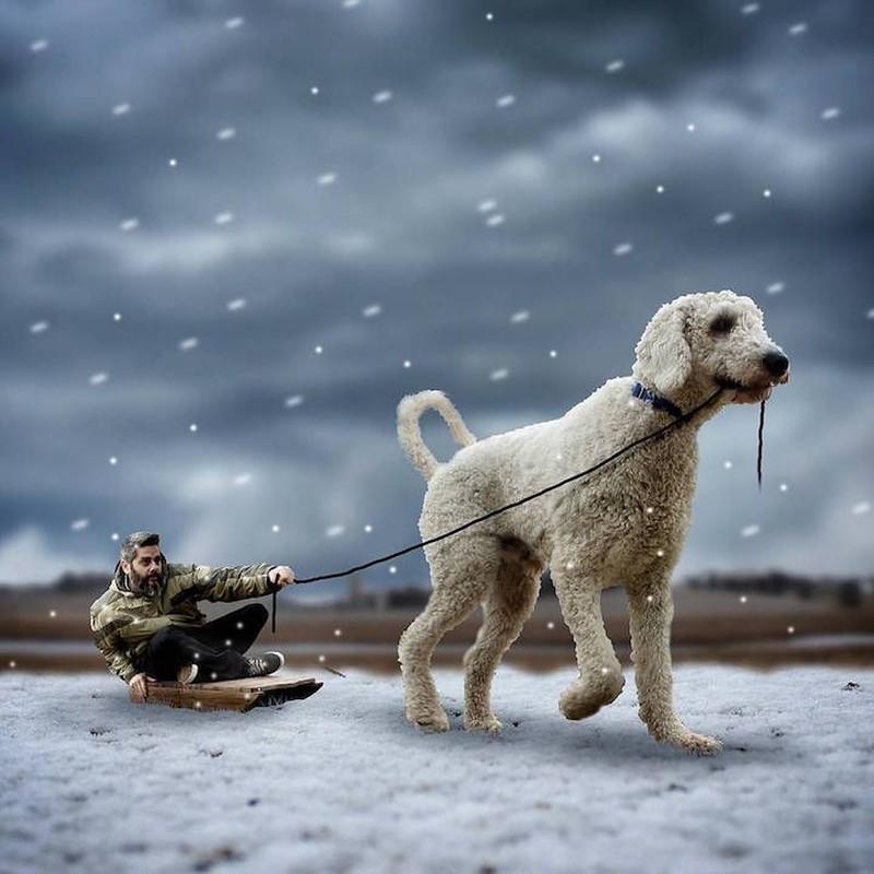 Пес в упряжке Вечерняя прогулка и катание на санках.