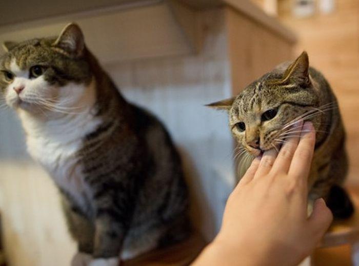 Два типа домашних котов