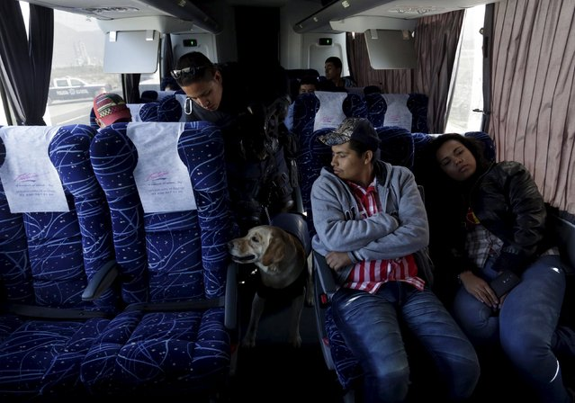 A police officer and his re-trained dog inspect a bus at a security checkpoint in Saltillo, Mexico M