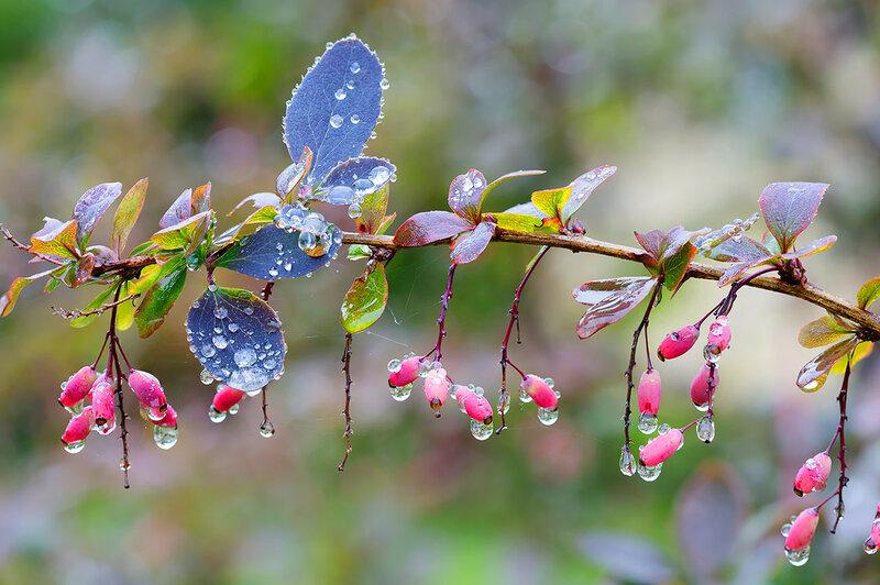 Песенка дождя