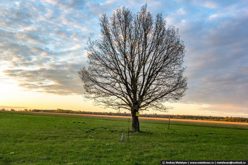 дерево на поле