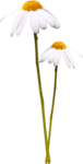 JazzminDesigns_Little Gardenflowers.png