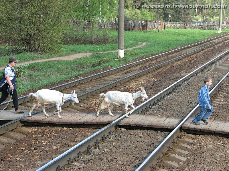 Окрестности о.п.Осеевская, перегон Чкаловская - Монино