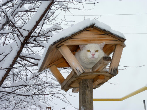 Зима, давай, до свидания!