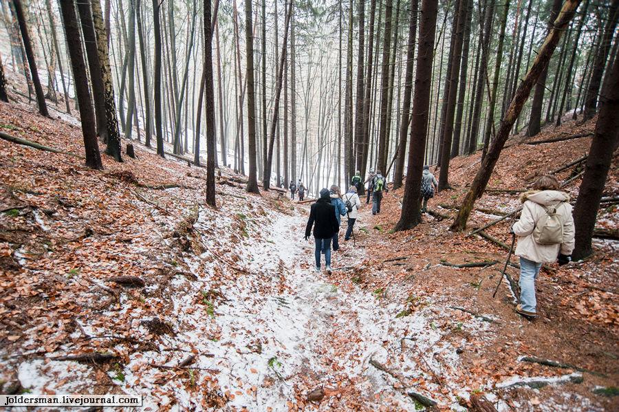 прогулка по немецкому лесу