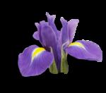 natali_design_easter_flower14-sh1.png