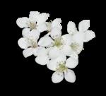 natali_design_easter_flower15-sh.png