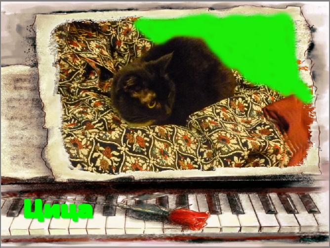 Высокохудожественная кошка Цица