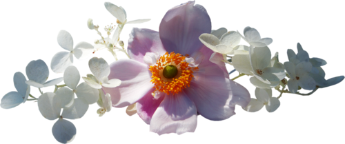 цветущие_веточки_деревьев