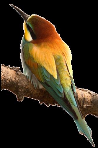 Bird1_14.6.png