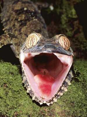 10 существ с необычной внешностью