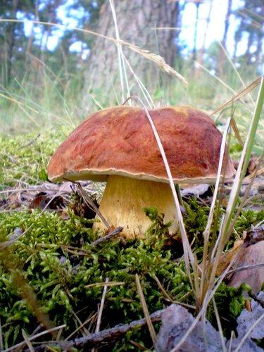 orlando56 — «Зря, белый гриб маскировался, на глаза нам все ж попался!» на Яндекс.Фотках